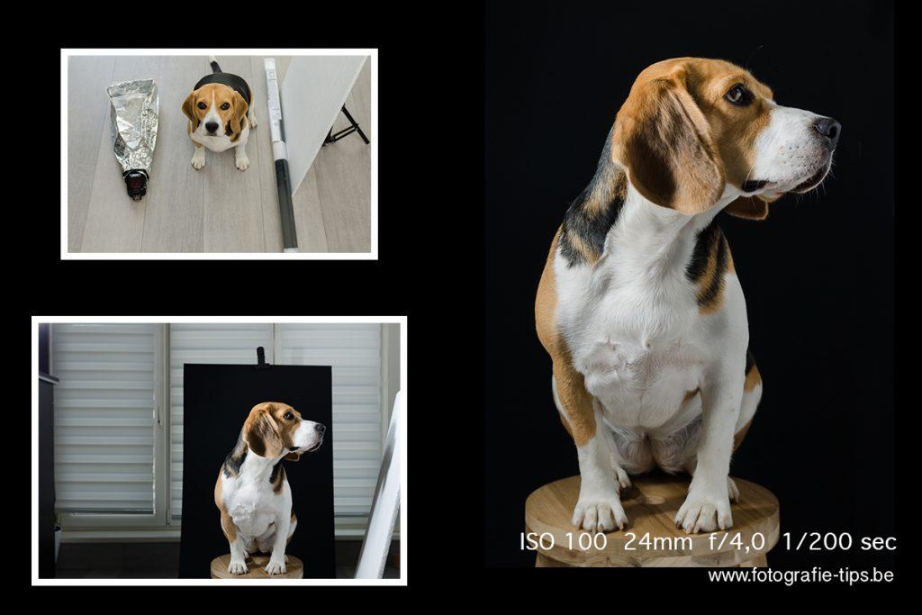 hondenfotografie-DIY - studio