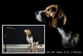 low-key foto hondenfotografie