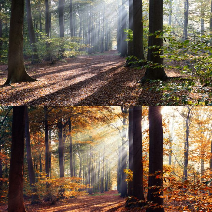 ADOBE LIGHTROOM PRESETS HERFST